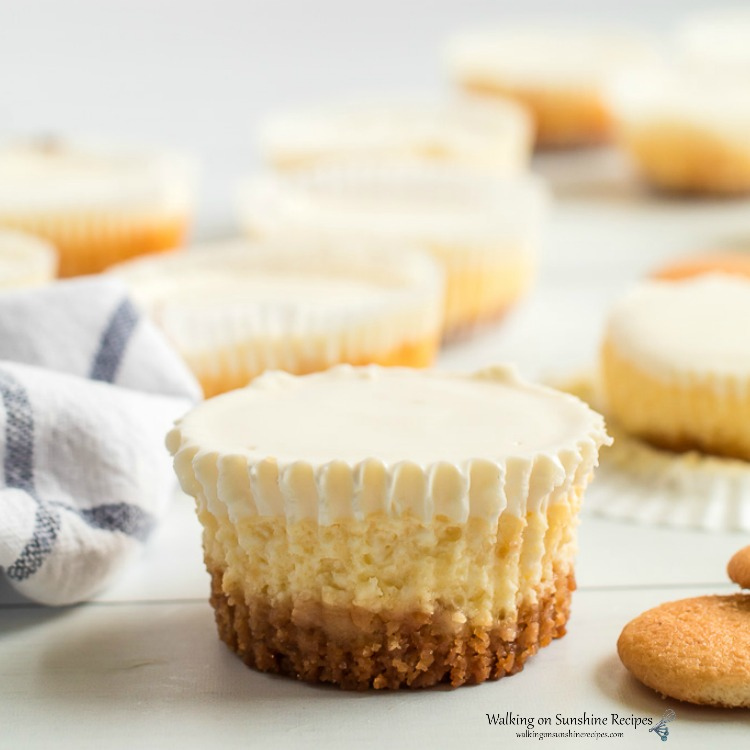 Closeup of Cheesecake Cupcakes with Sour Cream Topping