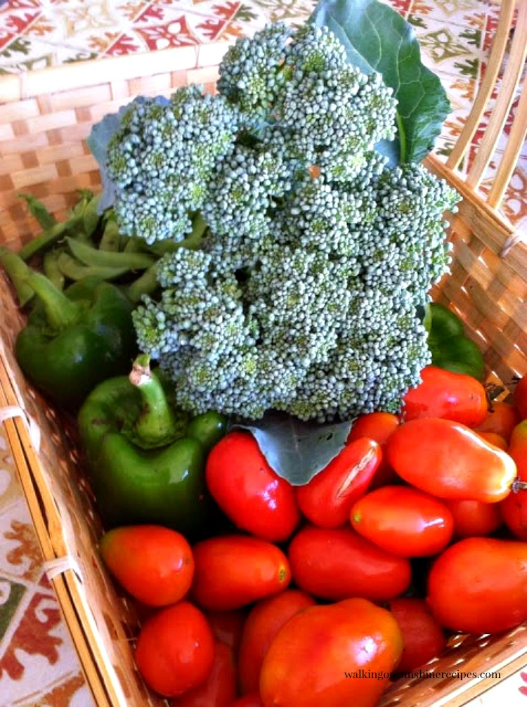 Basket of Broccoli, tomatoes and peppers from the WOS Garden