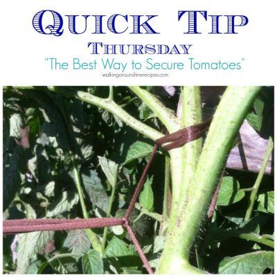 Easy Tips for Tying Up Tomato Plants