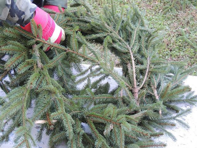 Make Your Own Christmas Wreath - Thursday's Tip from Walking on Sunshine.