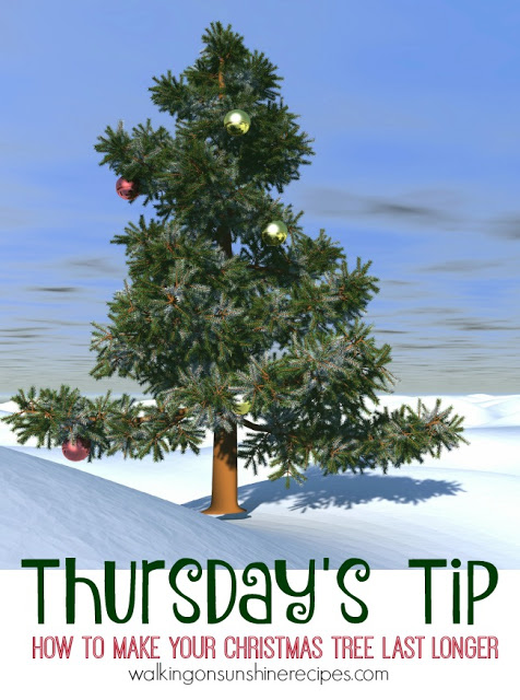 Come find the tips you need to know to help your Christmas tree last longer today on Walking on Sunshine Recipes.