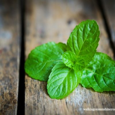 Gardening: Five Tips on How to Grow Mint in Your Garden