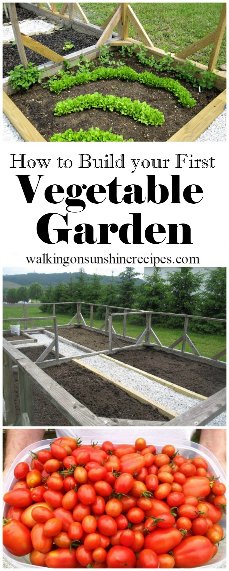 How To Build Your First Vegetable Garden Gardening