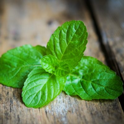 Five Tips on How to Grow Mint in Your Garden