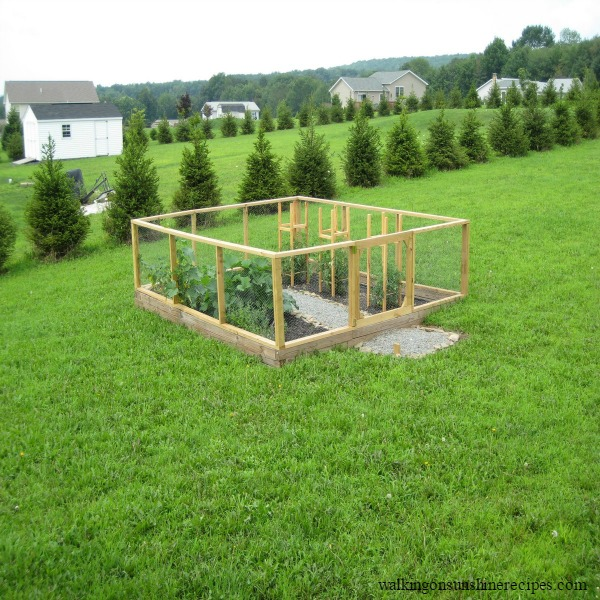 Creating Our First Vegetable Garden Advice Please: How To Build Your First Vegetable Garden
