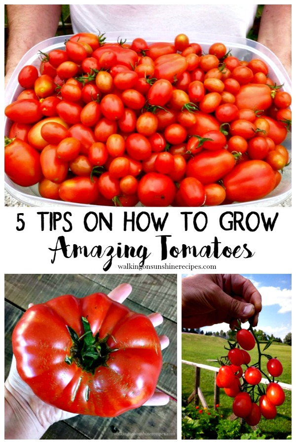 5 Tips on How to Grow Amazing Tomatoes from Walking on Sunshine Recipes