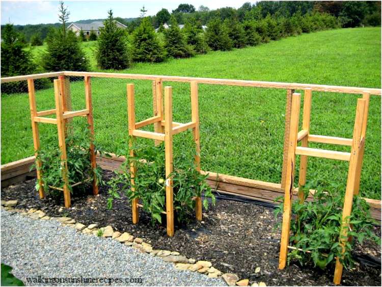 Homemade Tomato Cages from Walking on Sunshine Recipes