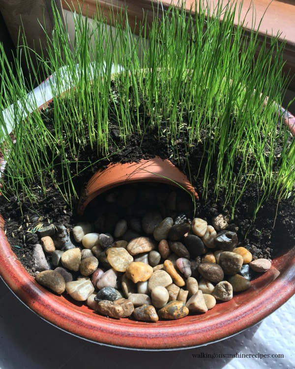 Grass Growing in the sun - Resurrection Garden from Walking on Sunshine