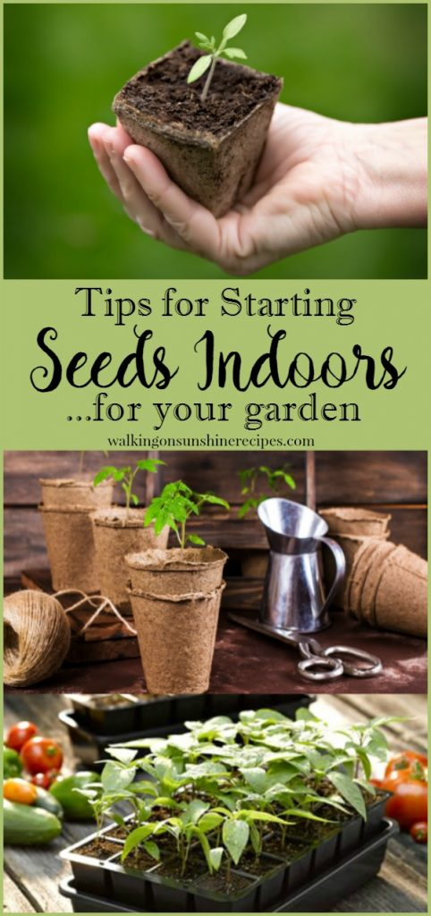 How to start seeds indoors for a great garden this summer from Walking on Sunshine.