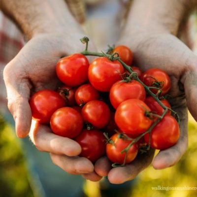 5 Mistakes to Avoid when Growing Tomatoes in Containers