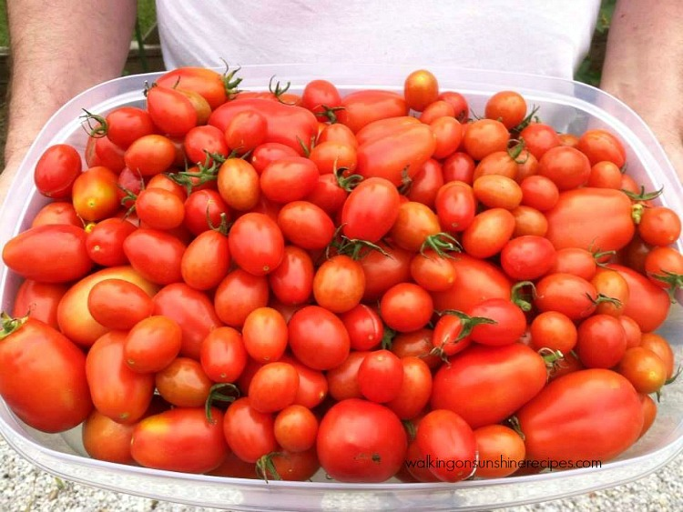 Large quantity of home-grown tomatoes from Walking on Sunshine Recipes.