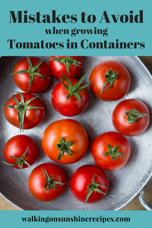 Mistakes to Avoid when Growing Tomatoes in Containers