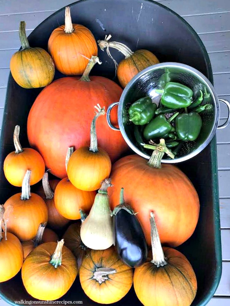 pumpkins, squash and peppers in wheel barrel