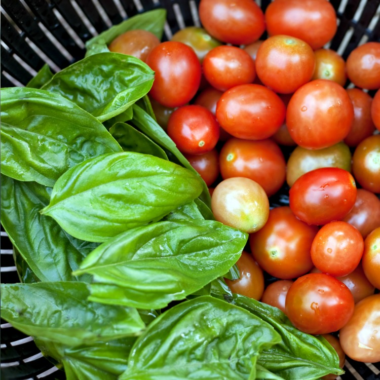 Basket of basil leaves and grape tomatoes