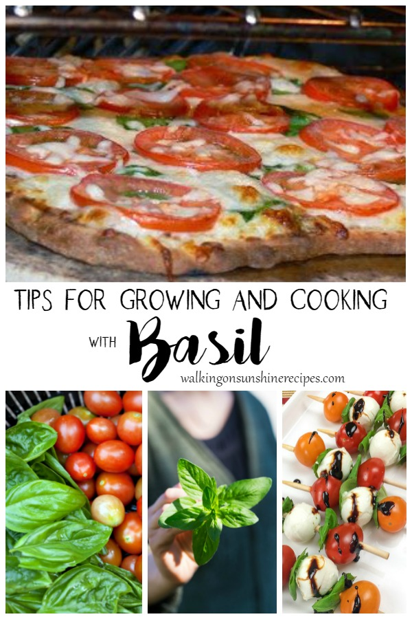 Recipes you can make using fresh basil from the garden.
