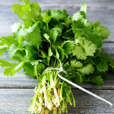 Cilantro – Tips for Growing and Cooking