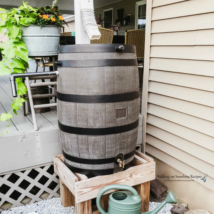 Rain barrel on wooden support stool