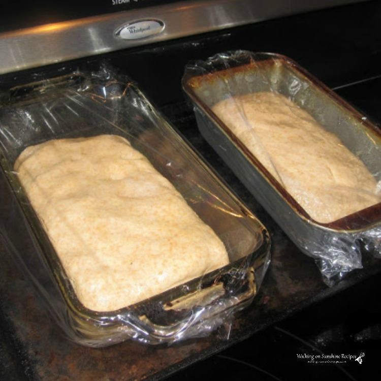 Two loaves of homemade bread in loaf pans covered with plastic wrapped ready to rise.