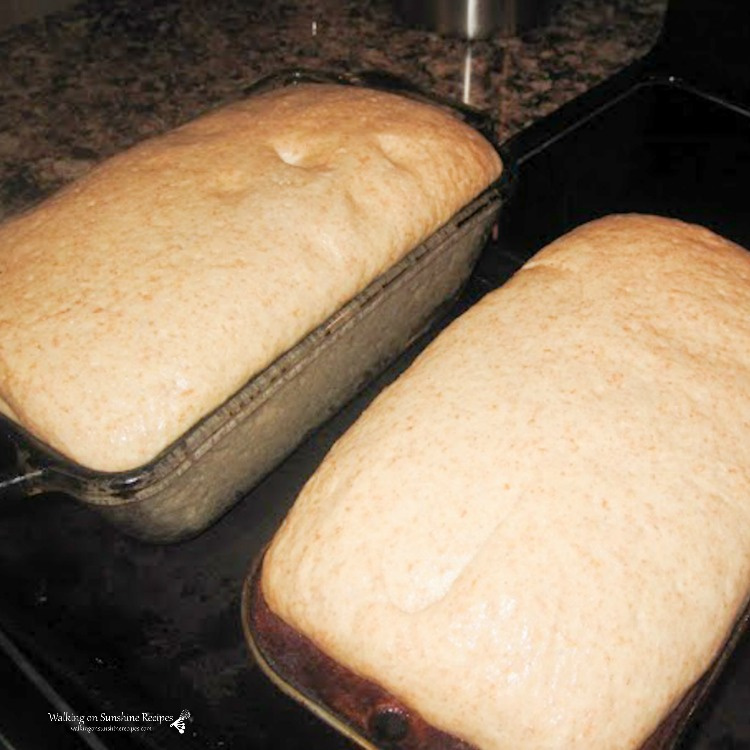 Honey Wheat Bread ready for the oven in two loaf pans.