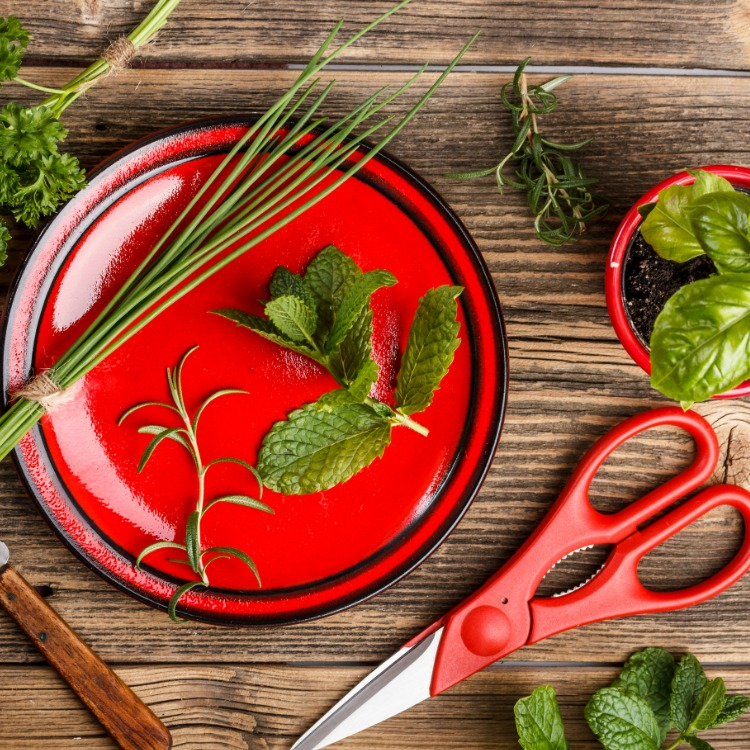 Red plate with herbs and scissors