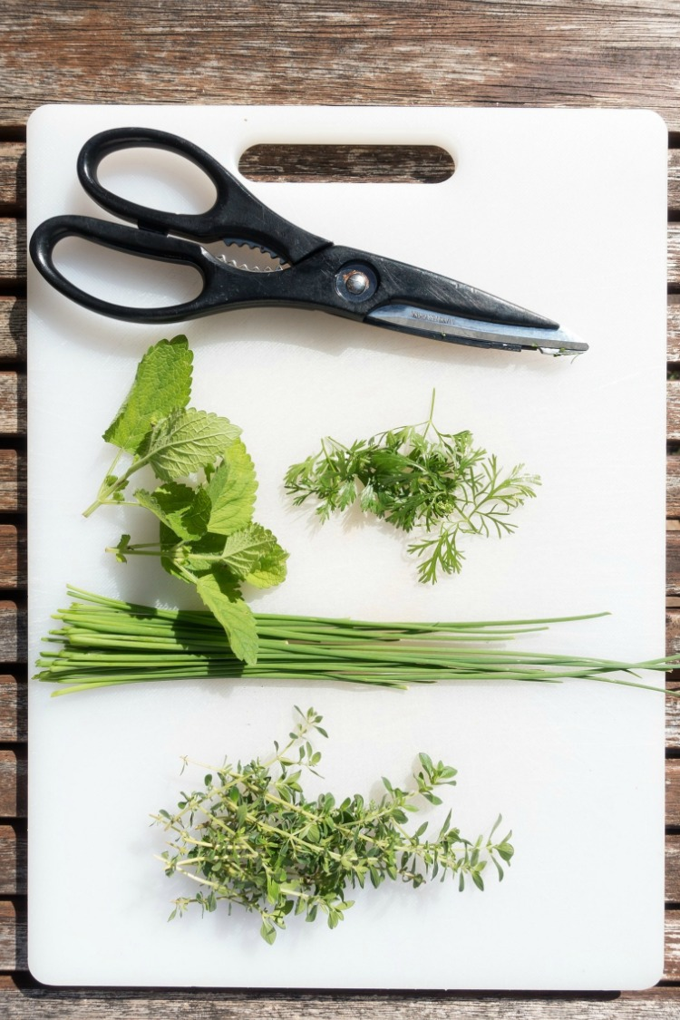 Fresh herbs on white cutting board with scissors.