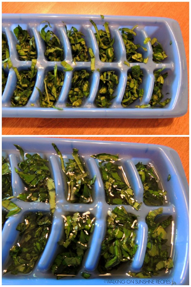 Fresh basil chopped in ice cube trays.