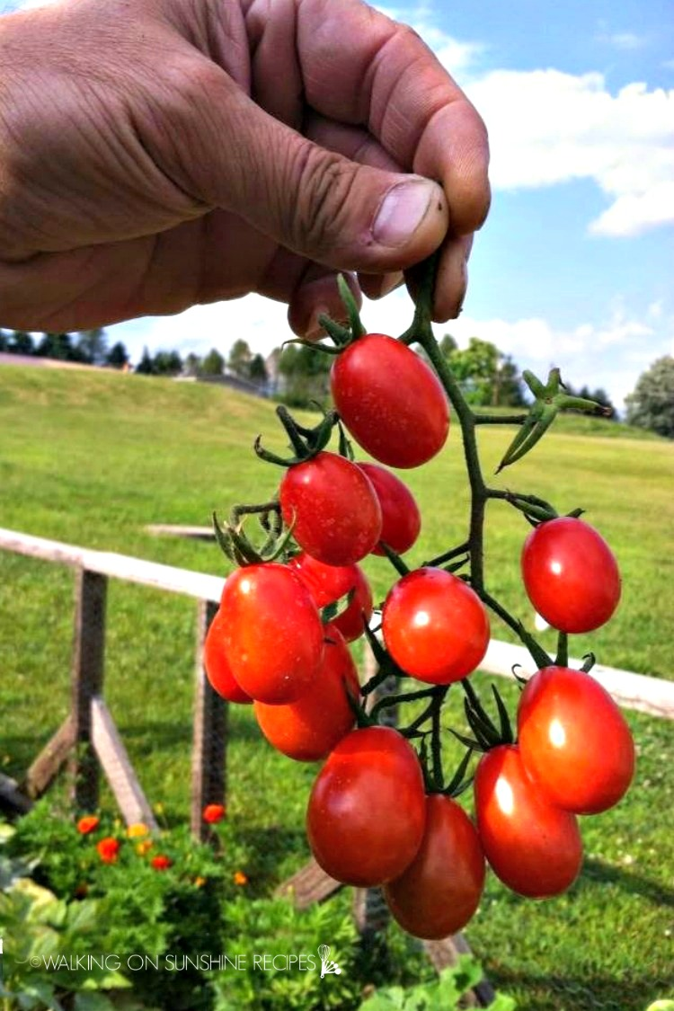 Grape tomatoes on vine being held in the air.